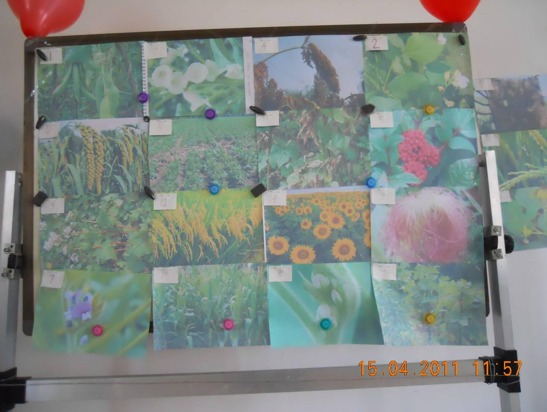 幼儿园教师牙签粘贴画图片